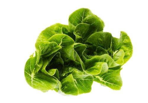właściwości zdrowotne sałaty